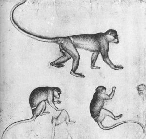 Pisanello - Apes (from The Artist S Sketchbook). Drawing. Louvre Museum, Paris