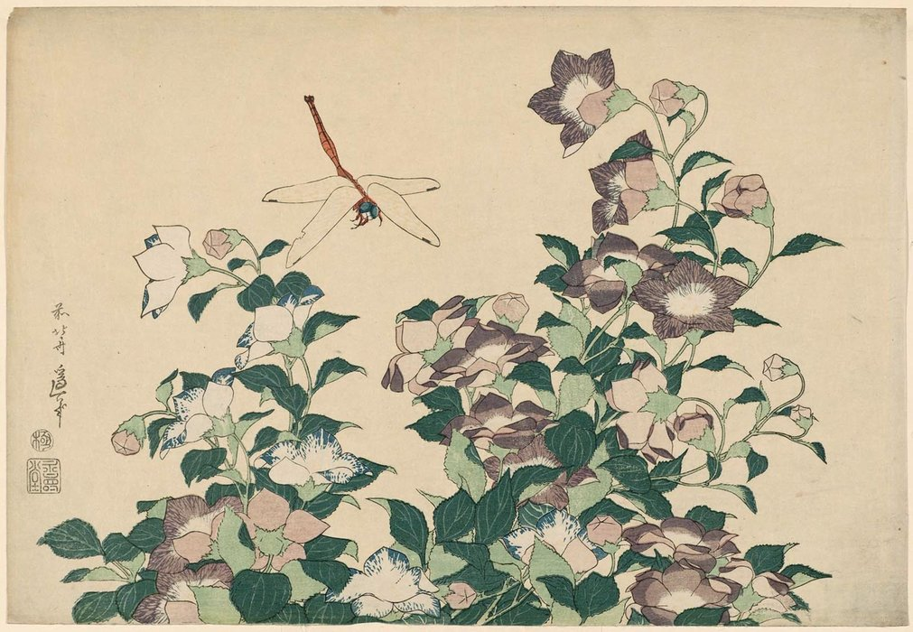 Bellflower And Dragonfly, From An Untitled Series Known As Large Flowers by Katsushika Hokusai (1760-1849, Japan)