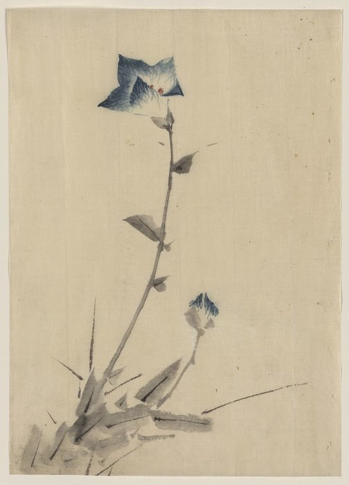 Blue Flower Blossom And Bud At The End Of A Stalk by Katsushika Hokusai (1760-1849, Japan)