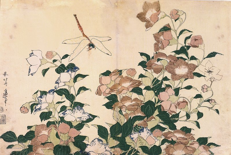 Chinese Bellflowers And Dragonfly by Katsushika Hokusai (1760-1849, Japan)