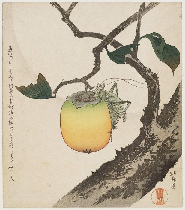 Grasshopper And Persimmon by Katsushika Hokusai (1760-1849, Japan)