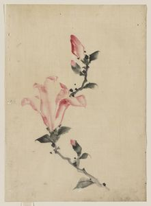 Katsushika Hokusai - Large Pink Blossom On A Stem With Three Additional Buds