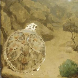 A Turtle by Gerrit Willem Dijsselhof  (order Fine Art painting copy Gerrit Willem Dijsselhof)