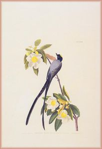 John James Audubon - fly catcher