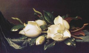Martin Johnson Heade - magnolias