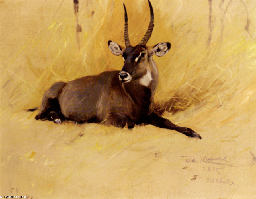 Order Reproductions | A common waterbuck by Friedrich Wilhelm Kuhnert (1865-1926, Poland) | WahooArt.com
