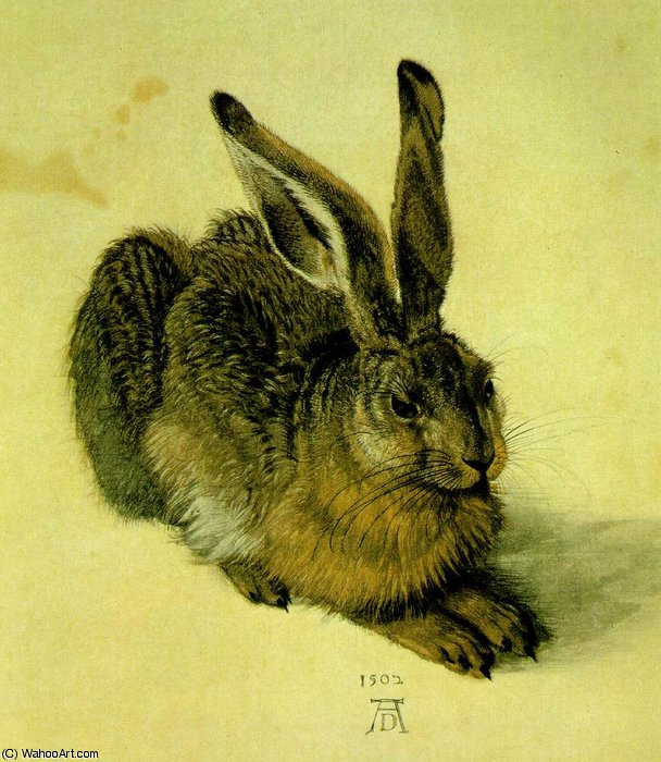 A YOUNG HARE,1502, WATER COLOUR,Graphische Sammlung Al by Albrecht Durer (1471-1528, Italy) | Museum Quality Reproductions | WahooArt.com