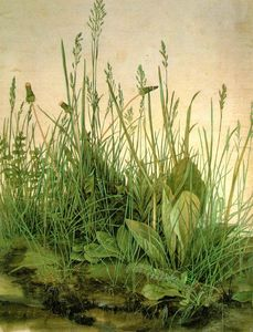Albrecht Durer - THE LARGE TURF,1503, WATER COLOUR,Graphische Sammlung