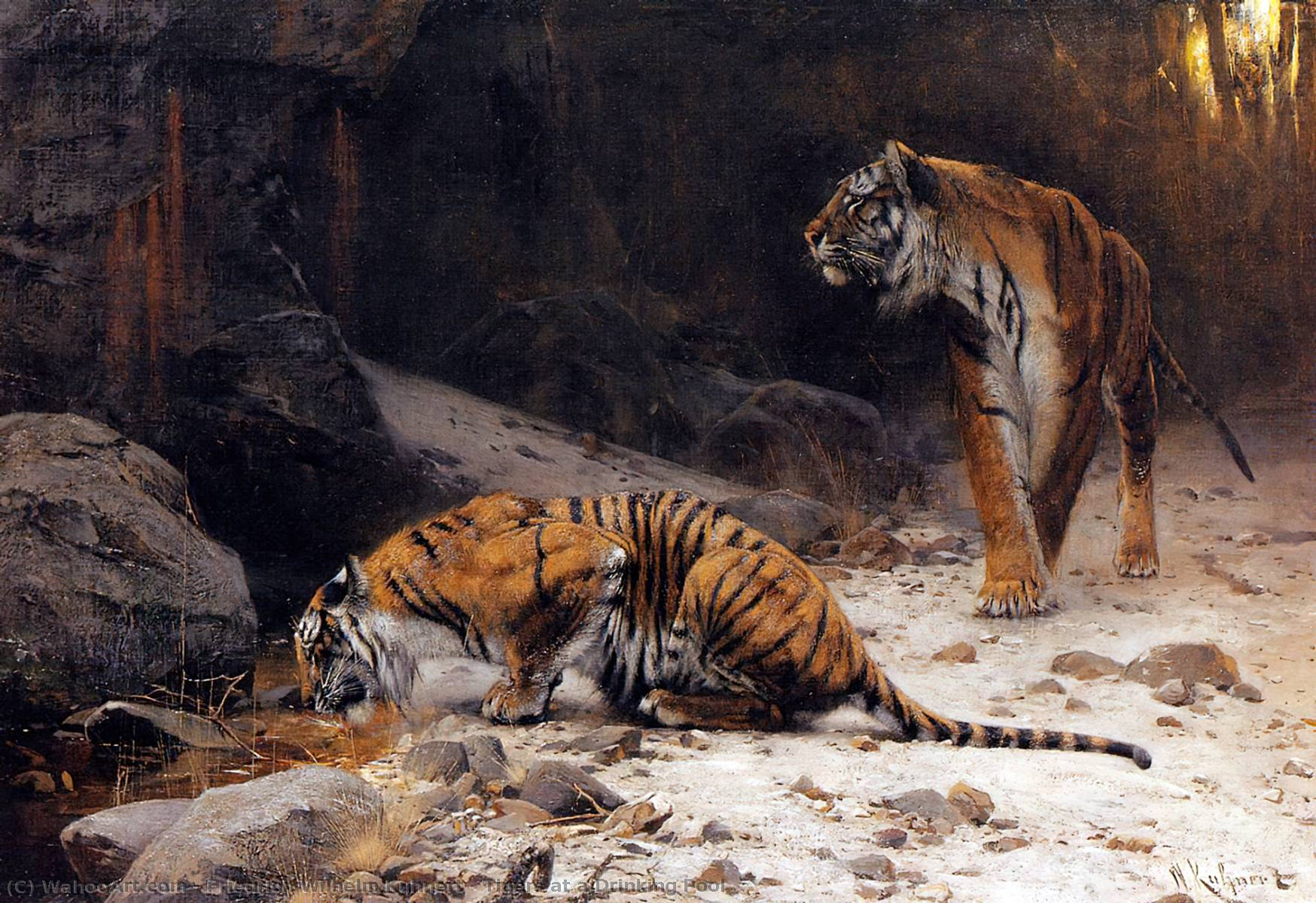 Tigers at a Drinking Pool by Friedrich Wilhelm Kuhnert (1865-1926, Poland) | Art Reproductions Friedrich Wilhelm Kuhnert | WahooArt.com