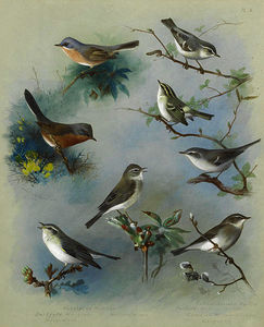 Archibald Thorburn - Warbler and Wrens