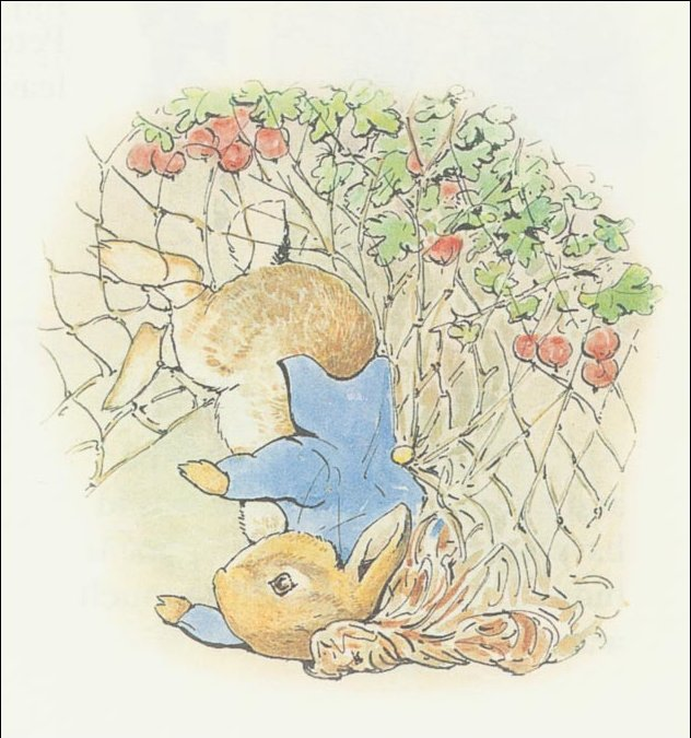 Peter rabbit 15a - (11x11) by Beatrix Potter (1866-1943)