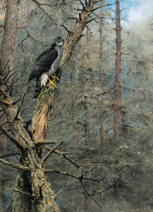 George Edward Lodge - A goshawk