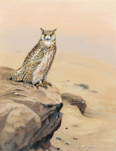 George Edward Lodge - Eagle owl on a rock
