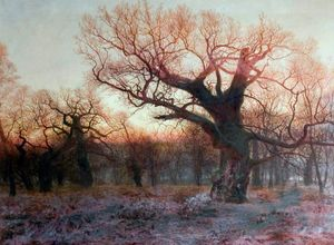 Andrew Maccallum - In Sherwood Forest, Nottinghamshire Winter Evening after Rain