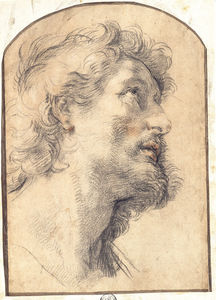 Benedetto Luti - Study of the Head of Saint Crispin