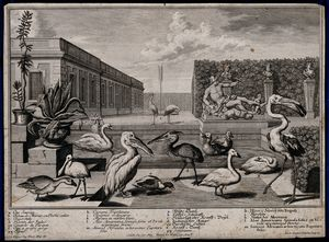 Salomon Kleiner - A garden pond with nine large exotic birds, two potted plant