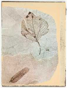 Joseph Cornell - Untitled (two fossilized leaves)