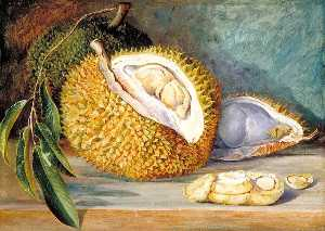 Marianne North - Durian Fruit from a Large Tree, Sarawak, Borneo