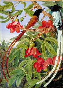 Marianne North - Foliage and Flowers of the Red Cotton Tree and a Pair of Long Tailed Fly Catchers, Ceylon