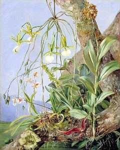 Marianne North - Jamaican Orchids Growing on a Branch of the Calabash Tree