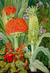 Marianne North - Haemanthus and Other South African Flowers