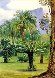 Marianne North - Group of Sago Yielding Cycads in the Botanic Garden at Rio Janeiro