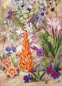 Marianne North - A Medley from Groot Post, South Africa