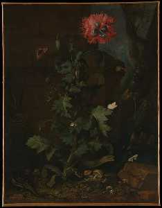Otto Marseus Van Schrieck - Still Life with Poppy, Insects, and Reptiles