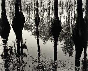 Brett Weston - Swamp