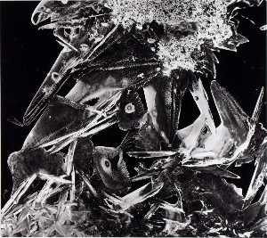 Brett Weston - Untitled (Ice Crystal)