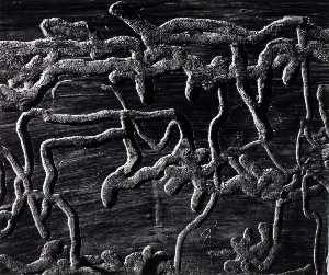 Brett Weston - Untitled (Wormwood)
