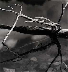 Brett Weston - Untitled