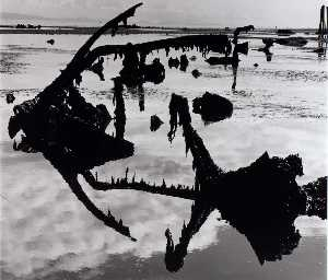 Brett Weston - Untitled (Swamp)