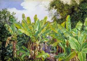 Marianne North - Study of Chinese Bananas and Bamboos, Teneriffe