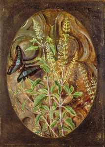 Marianne North - Holy Basil or Tulsi