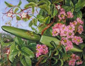 Marianne North - Two Flowering Shrubs of Java