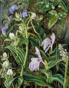 Marianne North - Wild Flowers of Kumaon, India