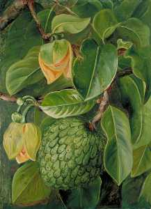 Marianne North - Foliage, Flowers and Fruit of the Soursop, Brazil