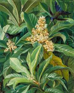 Marianne North - Foliage and Flowers of the Loquat or Japanese Medlar