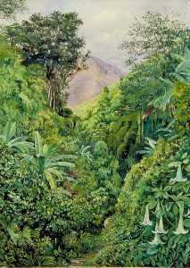 Marianne North - Valley behind the Artist's House at Gordontown, Jamaica