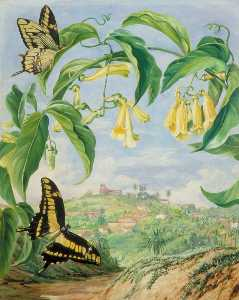 Marianne North - Yellow Bignonia and Swallow Tail Butterflies with a View of Congonhas, Brazil