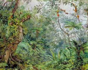 Marianne North - View of the Fernwalk, Jamaica