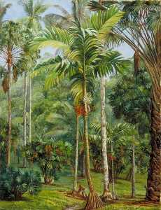 Marianne North - Group of Palms, Botanic Garden, Buitenzorg, Java
