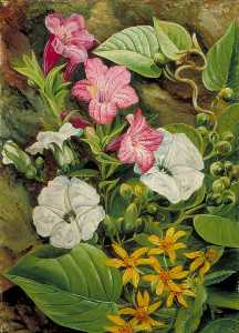 Marianne North - Some Brazilian Flowers