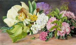 Marianne North - Flowers of North American Trees and Shrubs