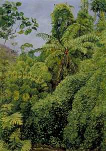 Marianne North - Tree Ferns and Climbing Bamboos in Gongo Forest, Brazil