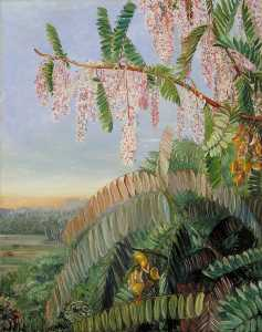 Marianne North - Flowers and Fruit of the Doctor's Tree, Sarawak, Borneo