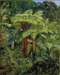 Marianne North - Group of Tree Ferns around the Spring at Matang, Sarawak, Borneo