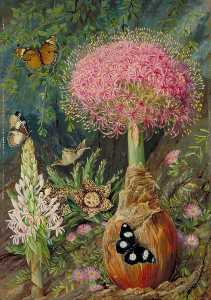 Marianne North - Buphane toxicara and Other Flowers of Grahamstown