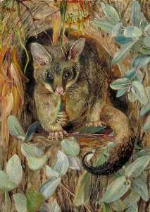 Marianne North - Possum up a Gum Tree